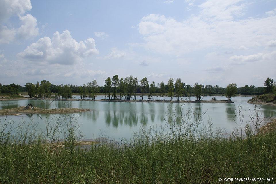 Le fleuve Rhône et ses forêts