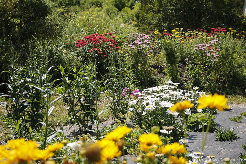 explorons le jardin d 39 ailleurs balade nature grand parc. Black Bedroom Furniture Sets. Home Design Ideas
