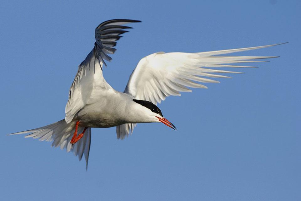 Protégeons ensemble la biodiversité