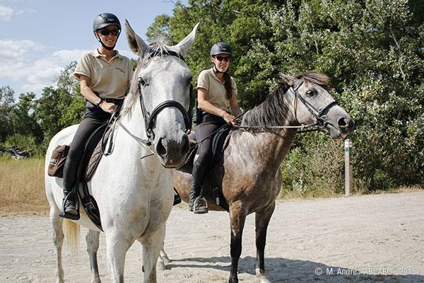 Offre d emploi garde a cheval